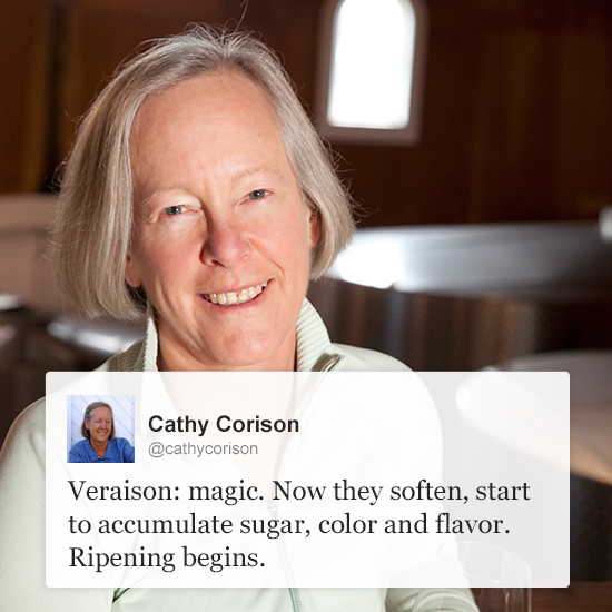 Wine Experts on Twitter: Cathy Corison