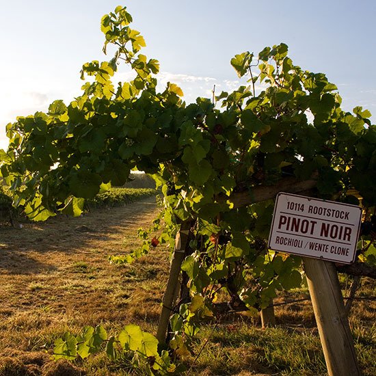 Sonoma County Wineries to Visit: J Vineyards