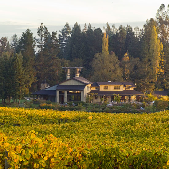 Sonoma County Wineries to Visit: Lynmar