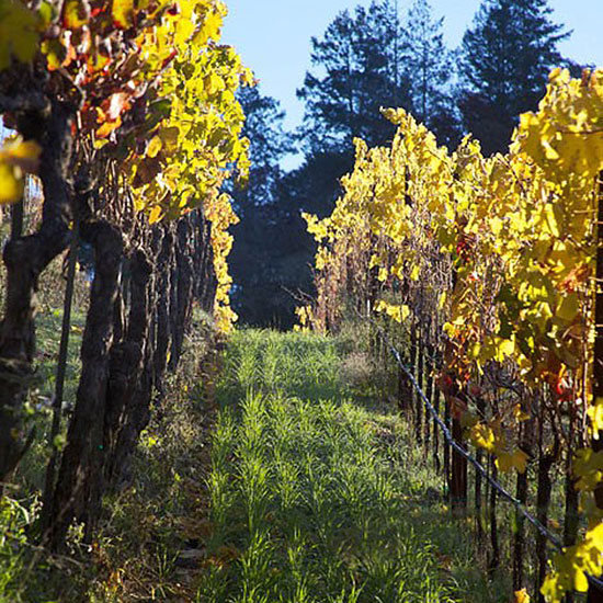 Sonoma County Wineries to Visit: Medlock Ames
