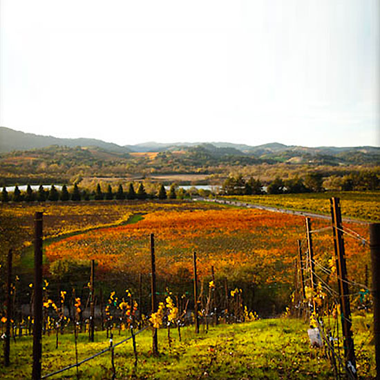 Sonoma County Wineries to Visit: WInd Gap