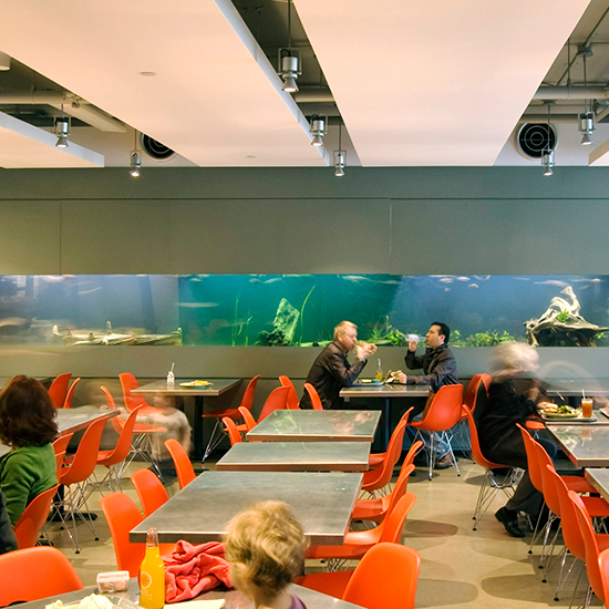 Best Museum Restaurants in the U.S.:Academy Café, California Academy of Sciences