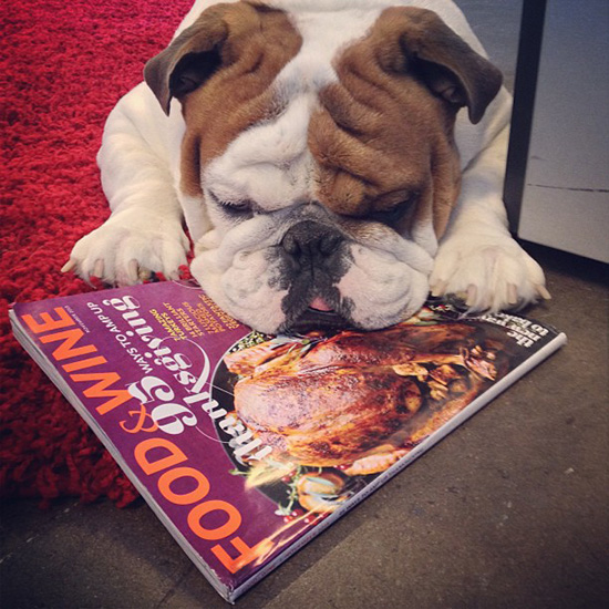 Food & Wine Pets: Moses the Bulldog