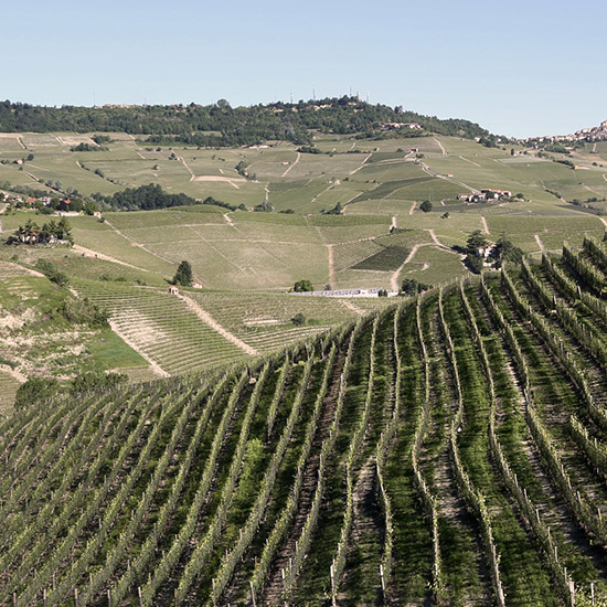 original-201410-HD-prunotto-winery-vineyard-scenic.jpg