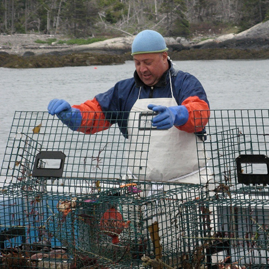 Checking Lobster Traps