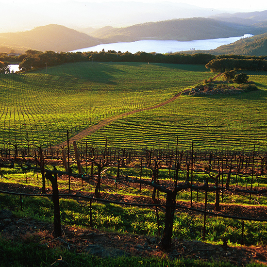 Napa Wineries: Chappellet