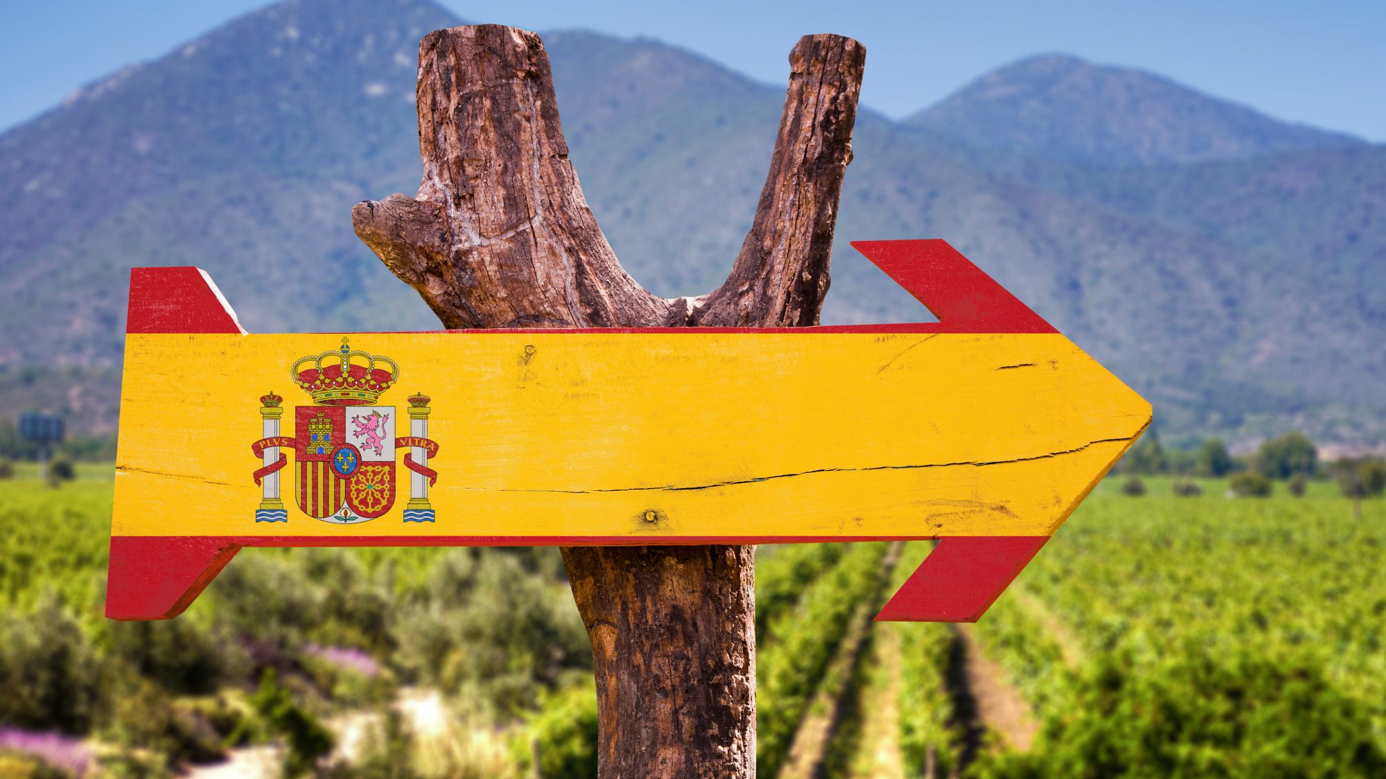 Spanish Wine Grapes