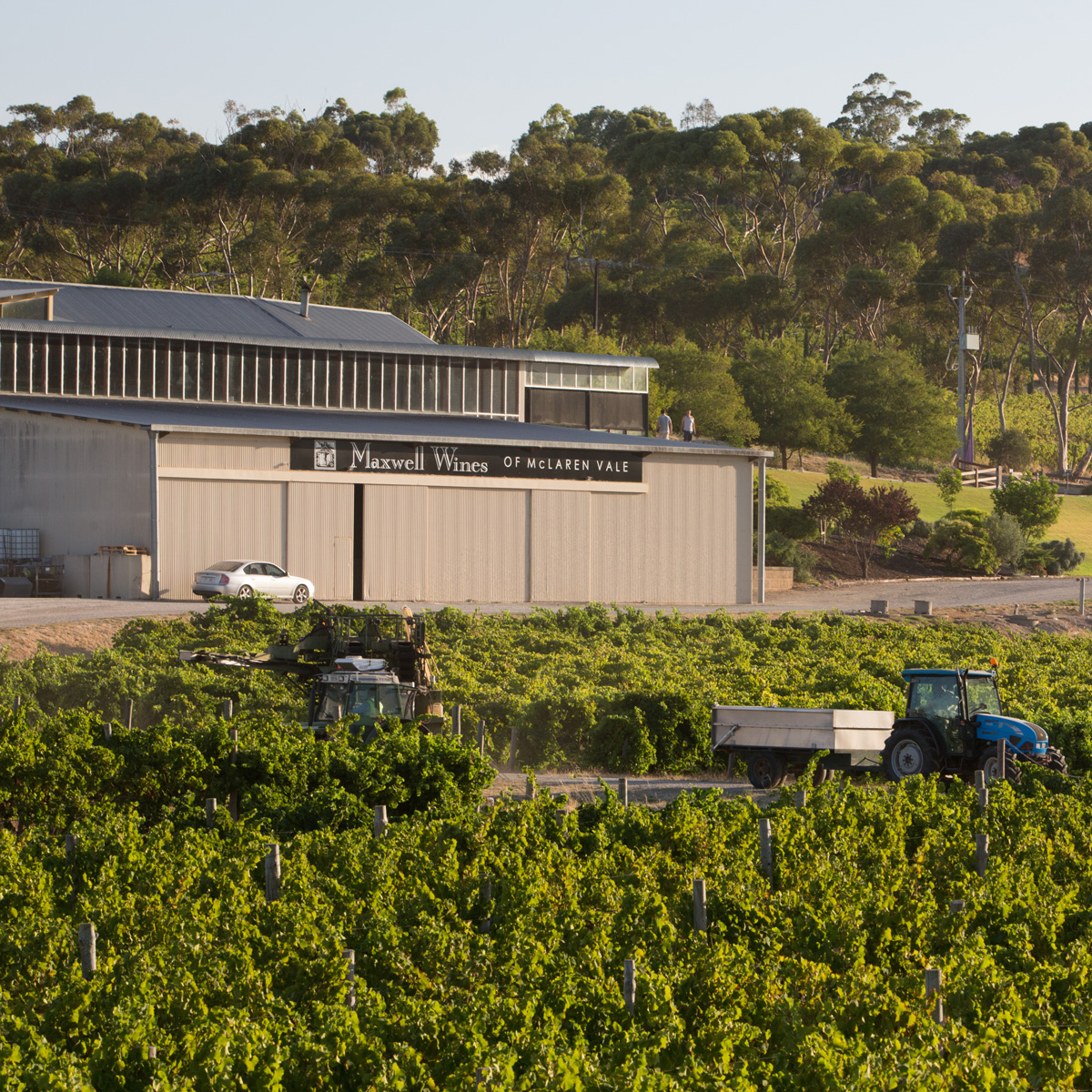 Maxwell Wines, McLaren Vale, South Australia
