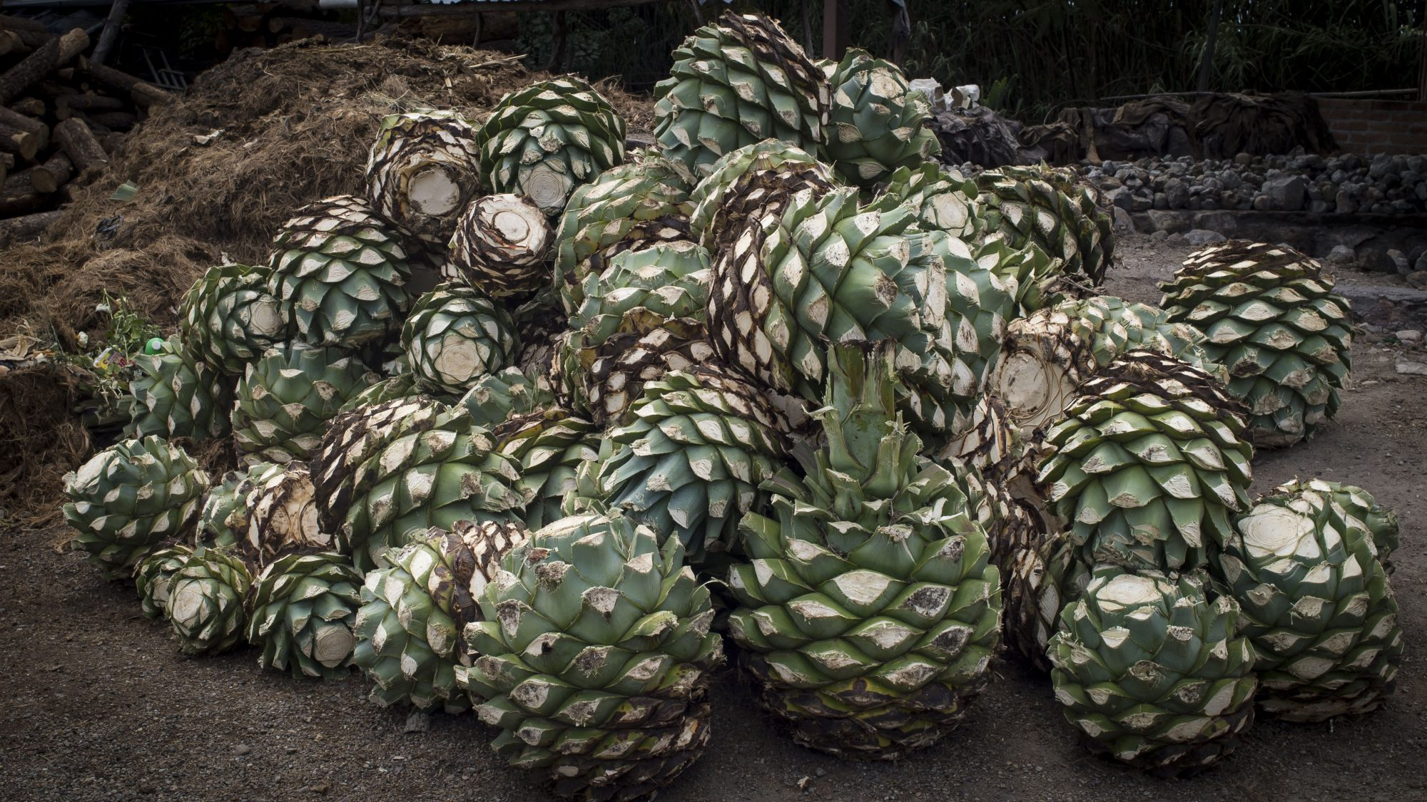 agave-tequila-mezcal-differences-FT-BLOG0417.jpg