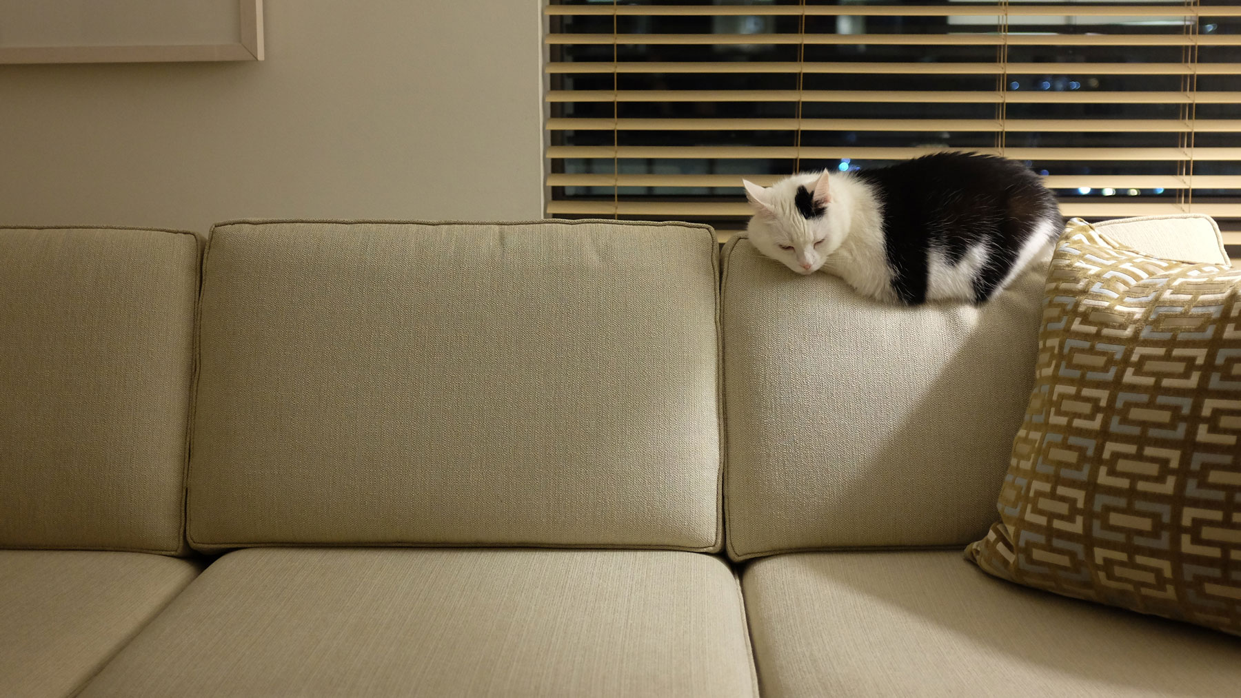 cat-hotel-sofa-FT-BLOG0517.jpg