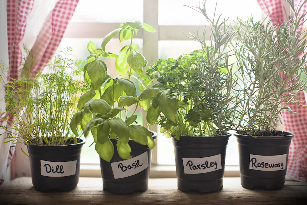 How to grow herbs at home