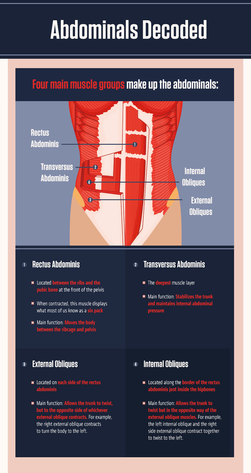 Abdominal Muscles Decoded