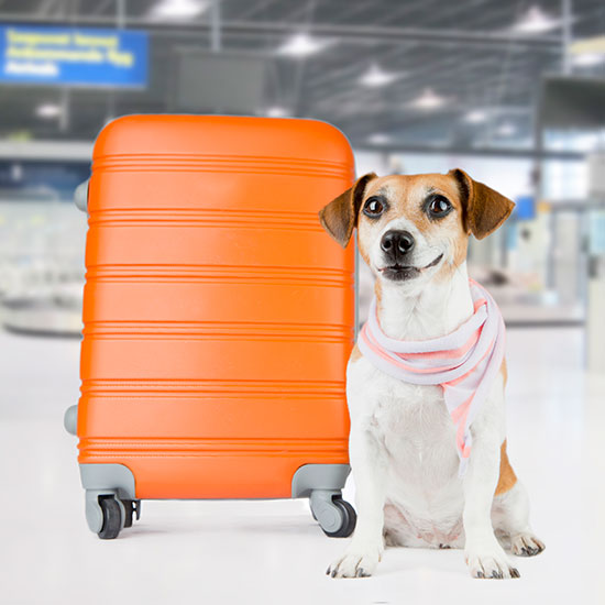 Avail yourself of indoor pet potties at John F. Kennedy International Airport.