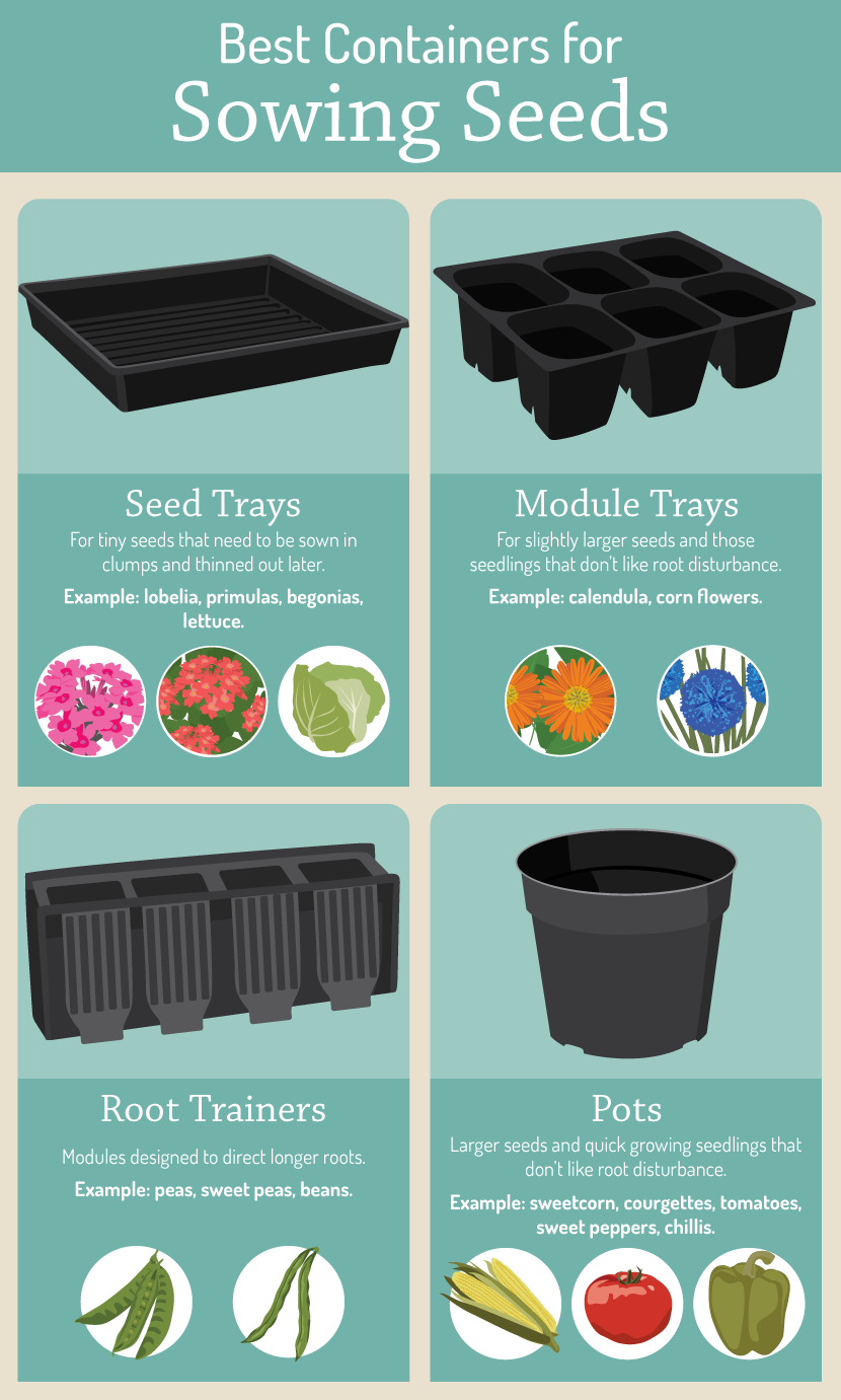 Best containers for sowing seeds