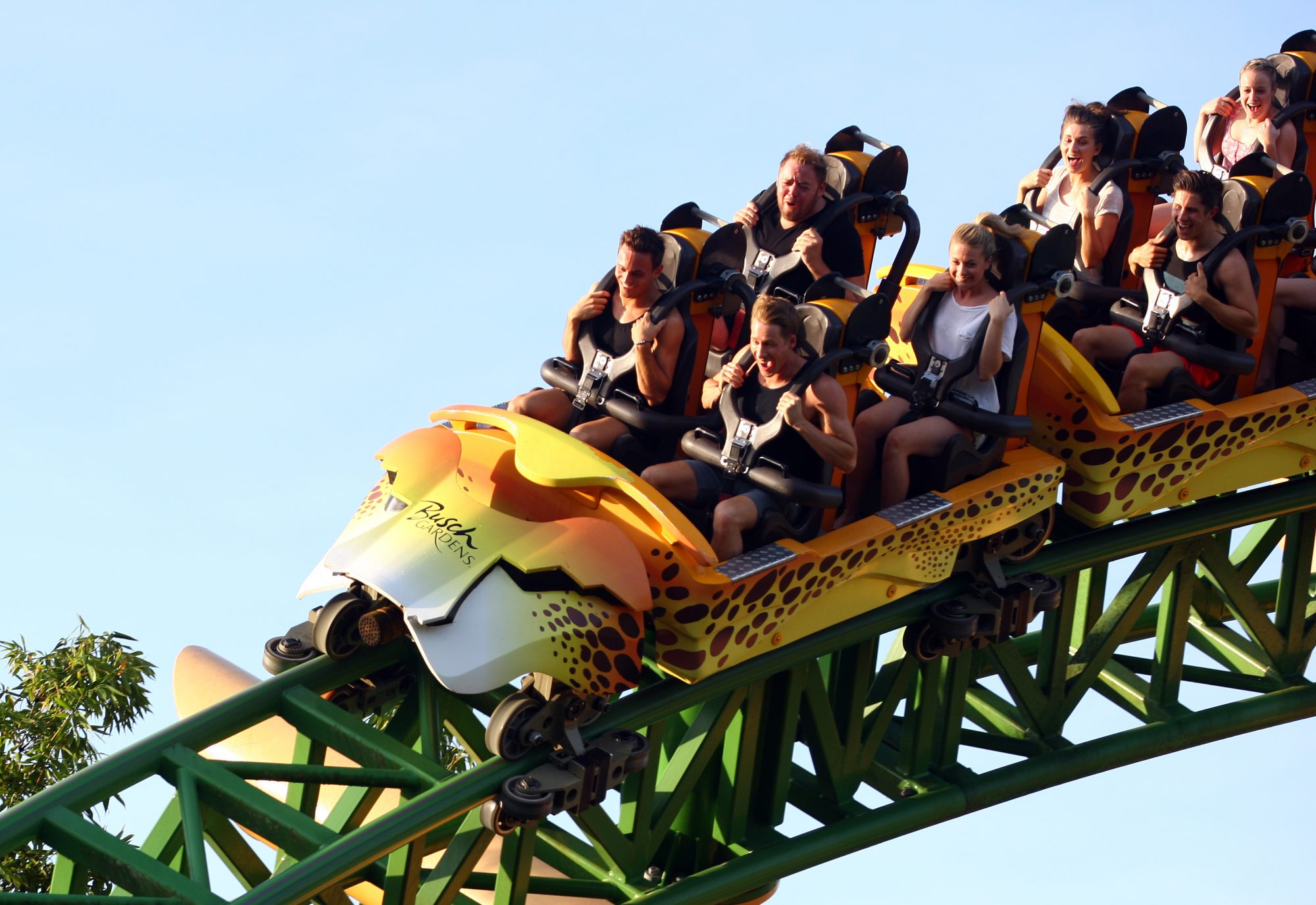 3. Cheetah Hunt