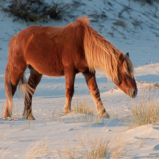 Instead of Virginia Beach, Try Chincoteague Island