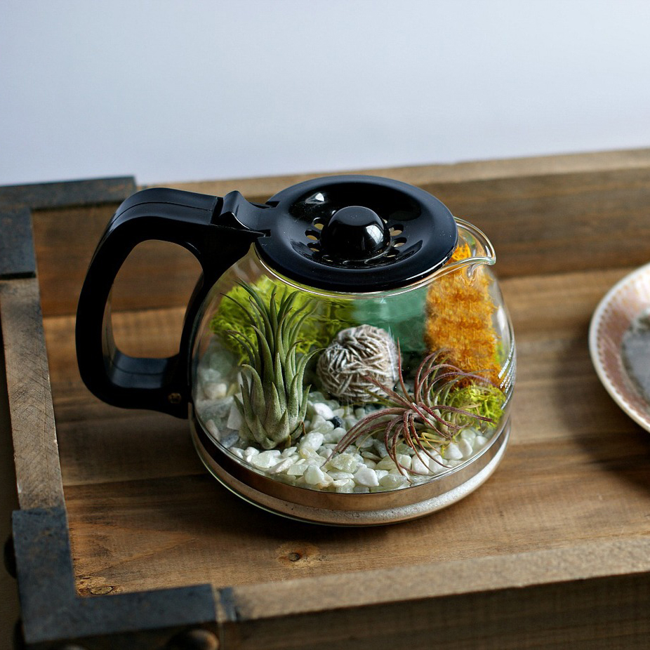 COFFEE POT TERRARIUM FWX