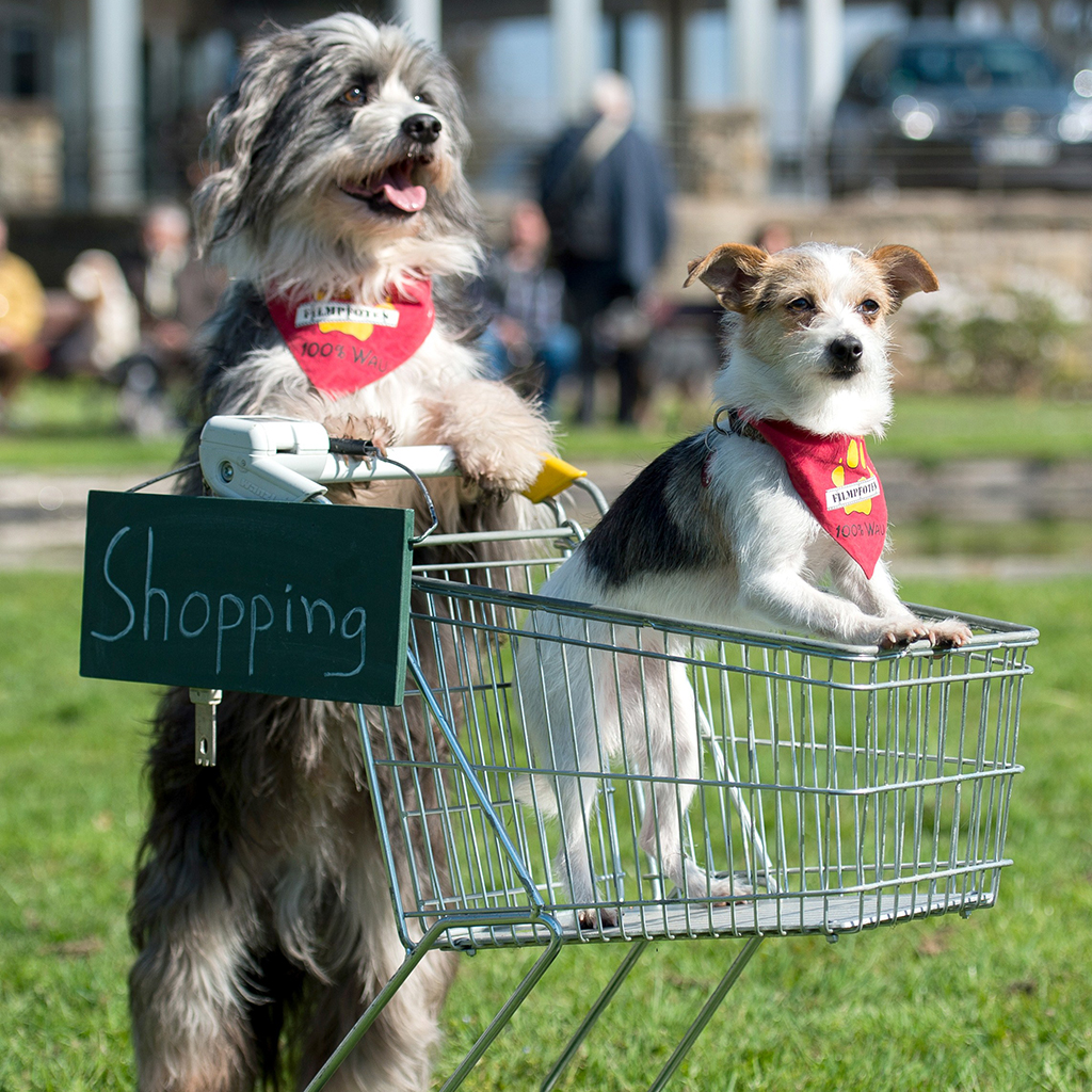 DOG SHOPPING CARTS IN ITALY FWX
