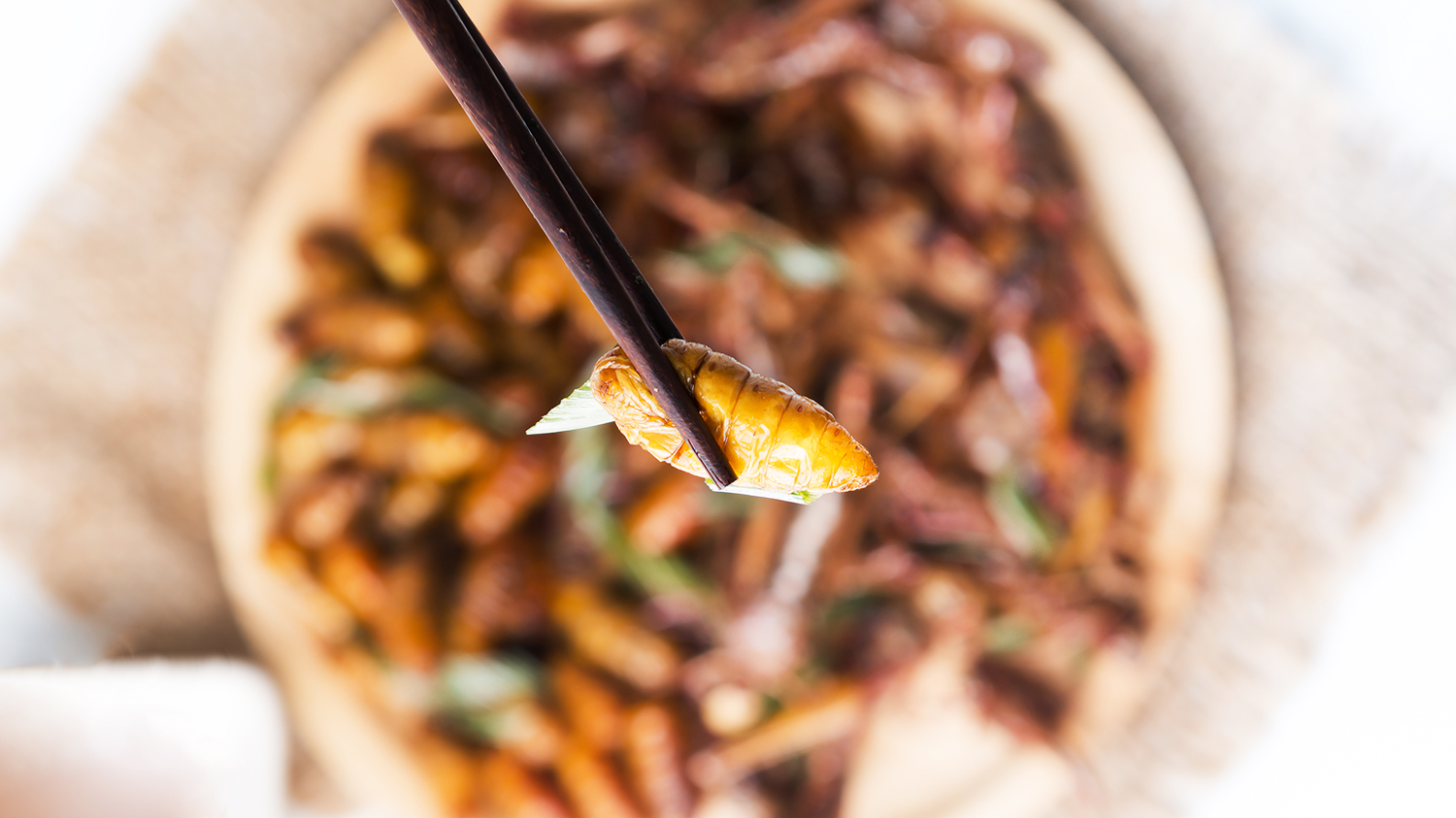 eating insects with chopsticks