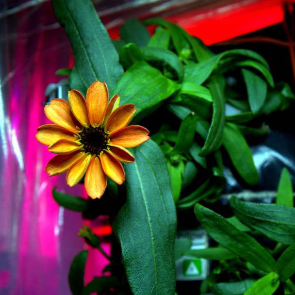 FIRST FLOWER BLOOMS IN SPACE FWX