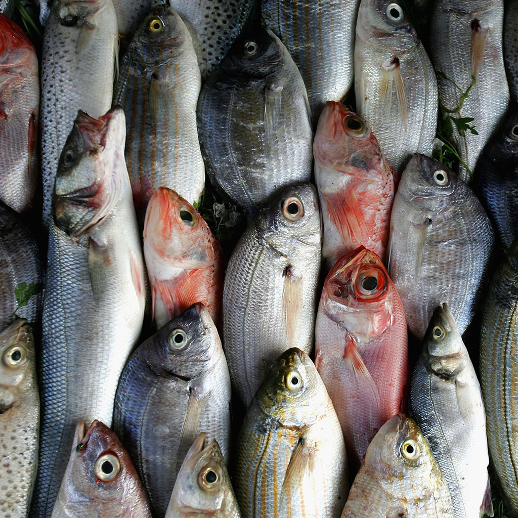 fish-fraud-fwx-2