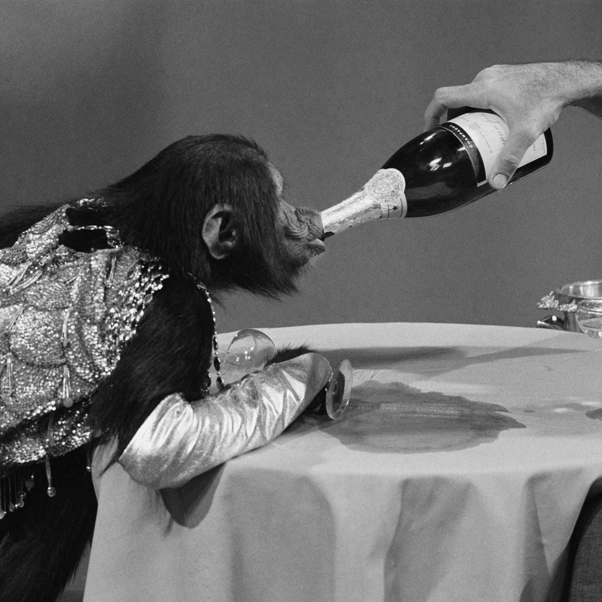FWX CHAMPAGNE IS GOOD FOR YOU_0
