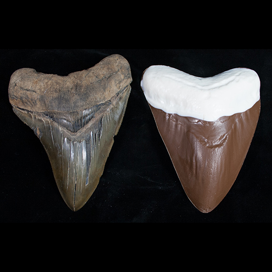 FWX CHOCOLATE MEGALODON TEETH