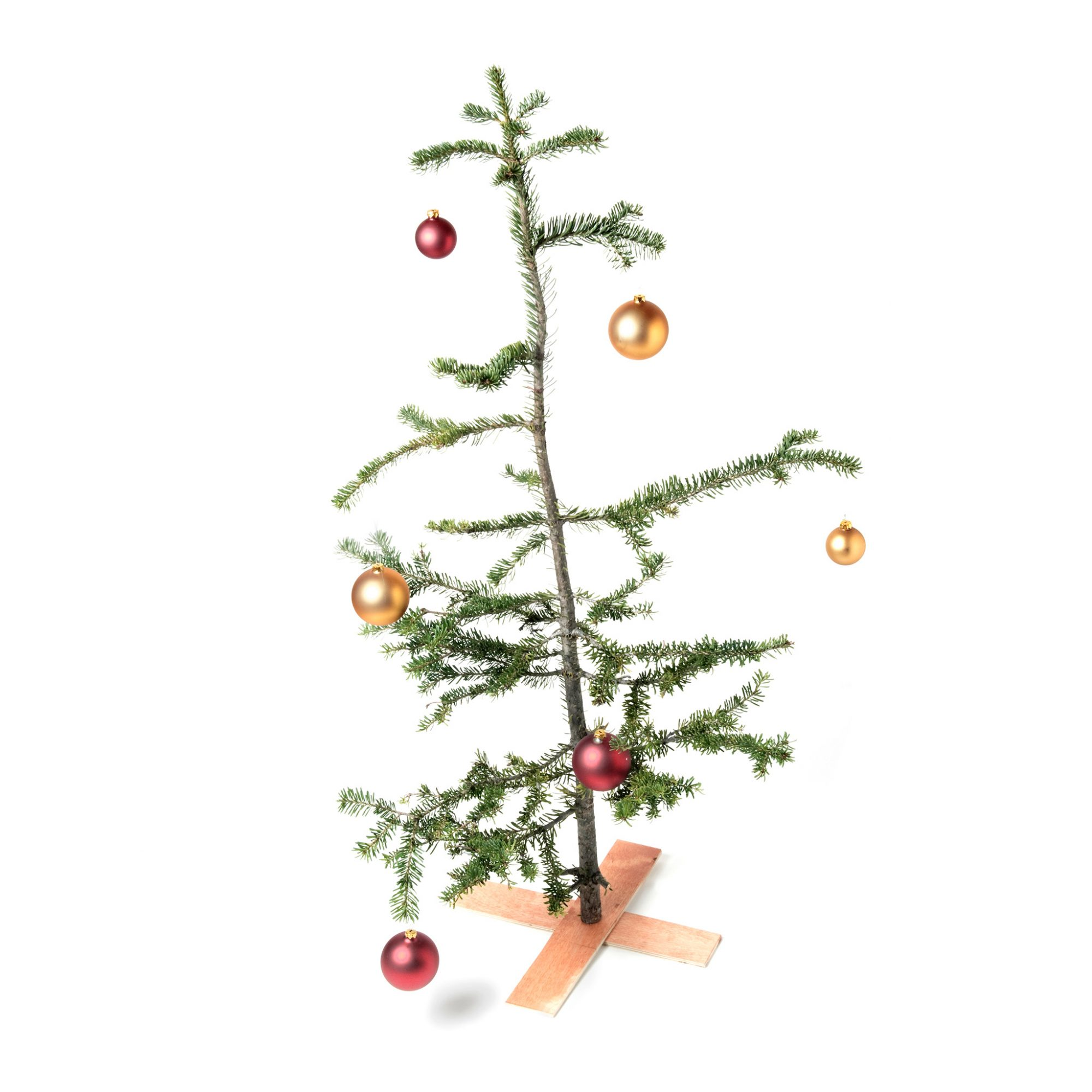 FWX CHRISTMAS TREE CLEAN UP