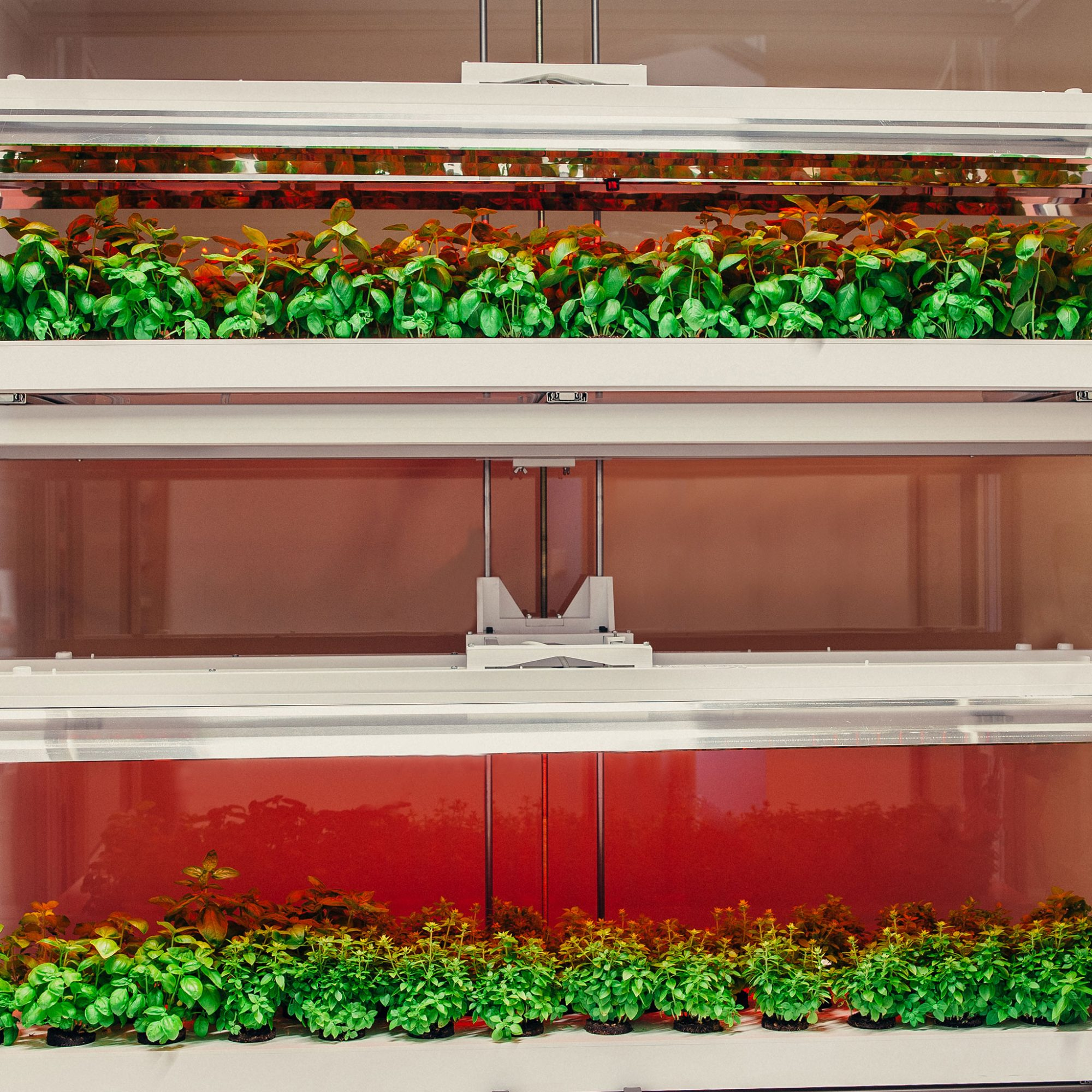 FWX CLICK AND GROW SMART FARM 2