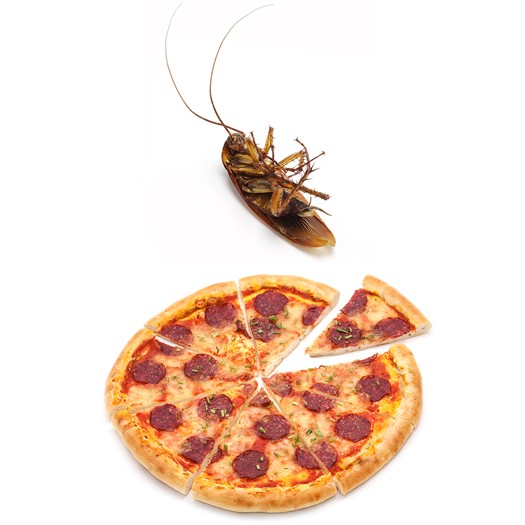 FWX COCKROACH PIZZA