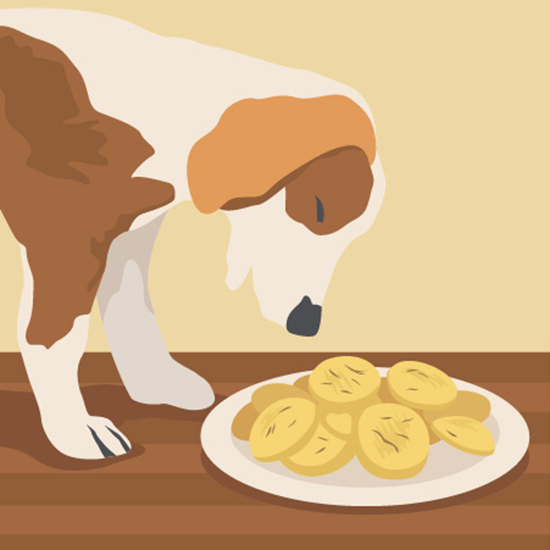 FWX PARTNER FIX HOMEMADE DOG TREATS
