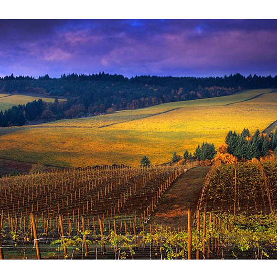 Instead of Napa, go to Willamette Valley, Oregon
