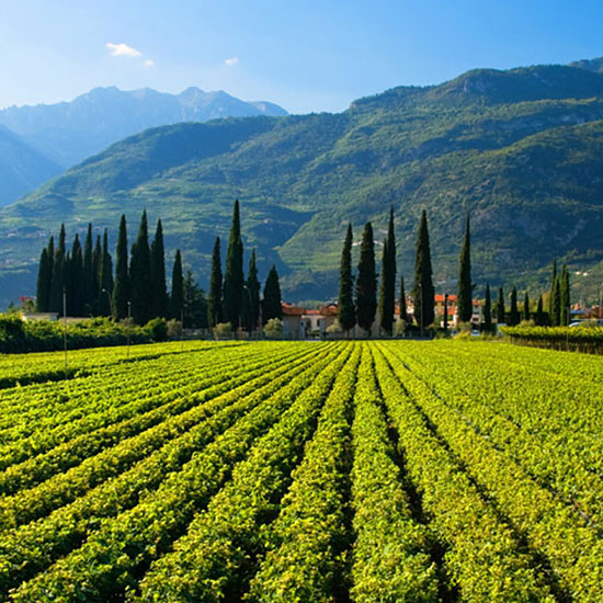 See Tuscany, Then Head to Umbria