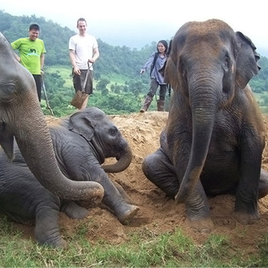 Save Elephants and Replant Trees in Thailand