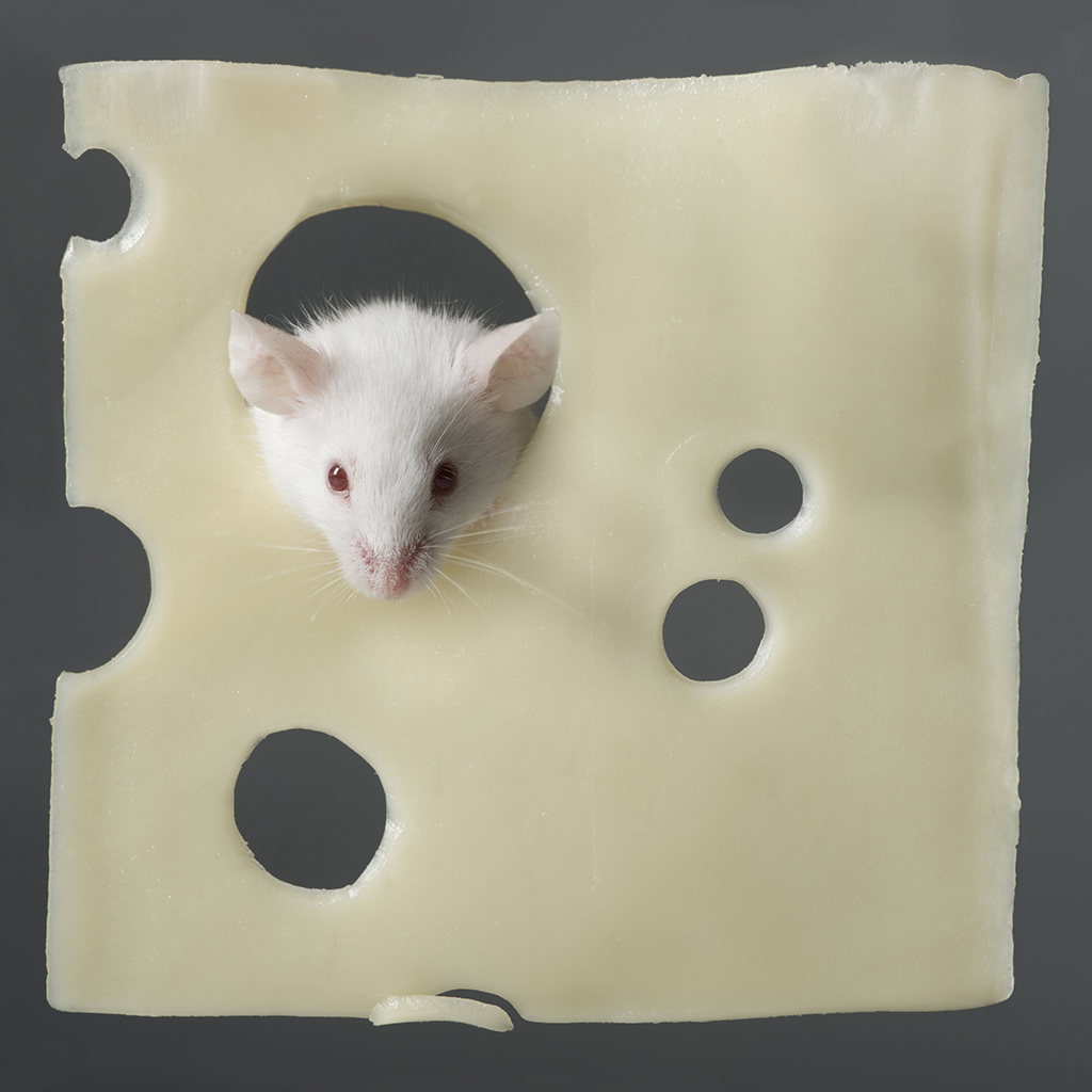 FWX SWISS CHEESE HOLES