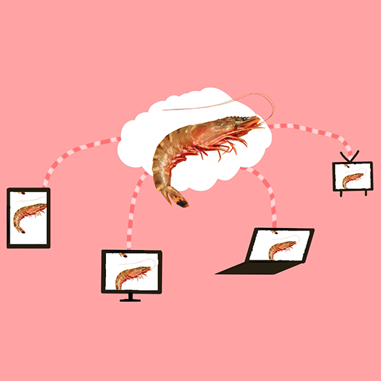 FWX THE SHRIMP CLOUD