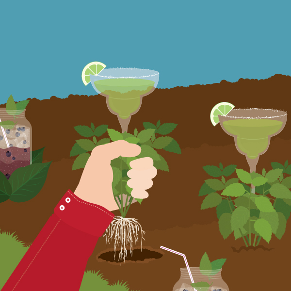 garden-to-glass-cocktails-fix-partner-fwx