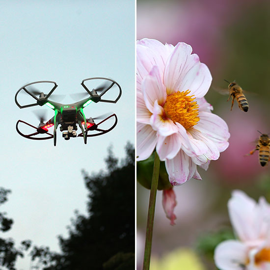 the drones and the bees