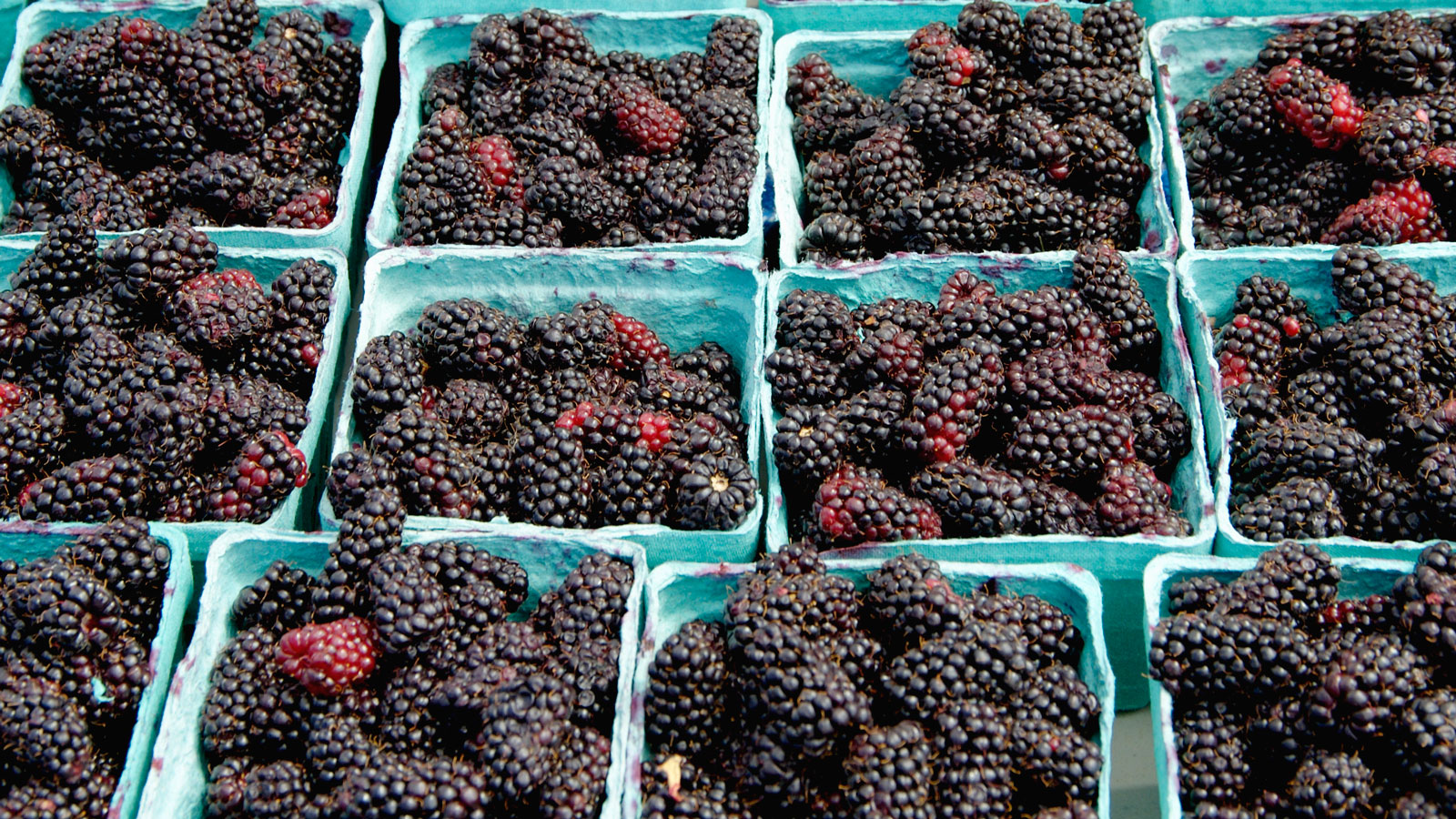 marionberries-blackberries-difference-between-FT-BLOG0617.jpg