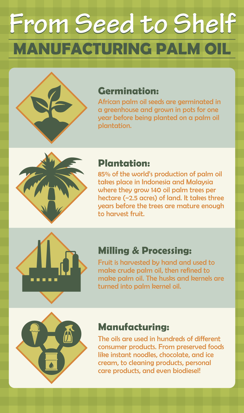 Manufacturing Palm Oil