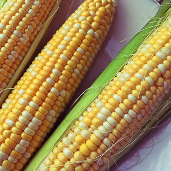 Corn: Best Canned