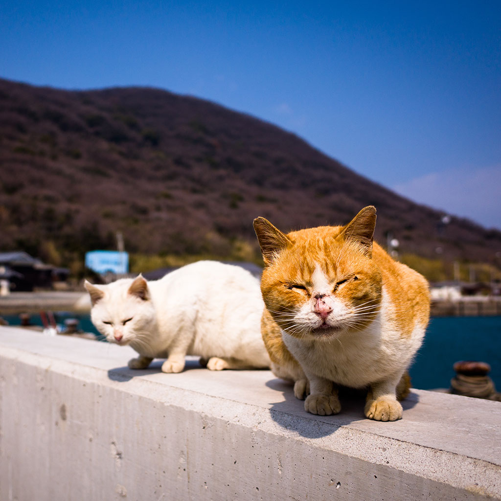 THERES TOO MUCH FOOD ON CAT ISLAND FWX