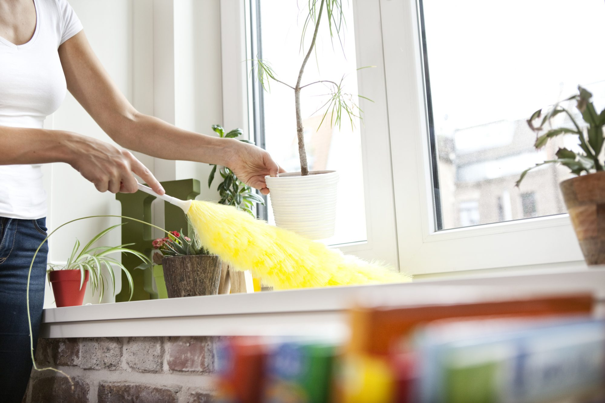 Household dust linked to weight gain.