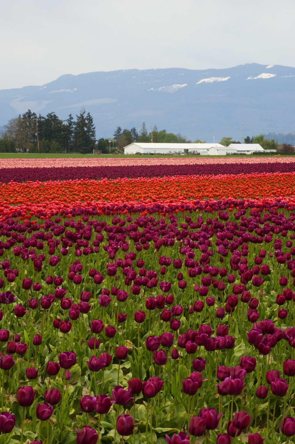skagit-valley-washington.jpg