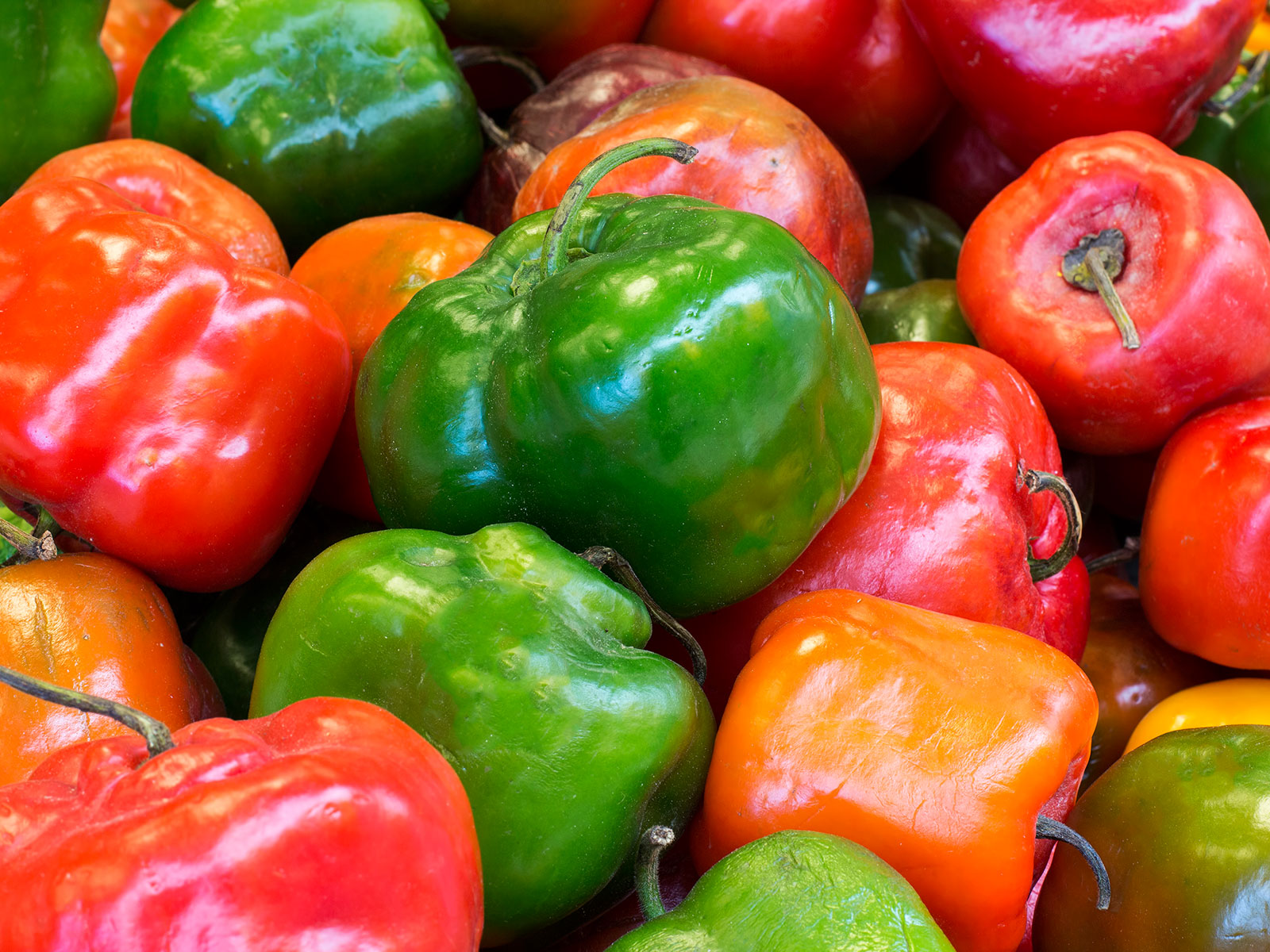 rocoto chie peppers