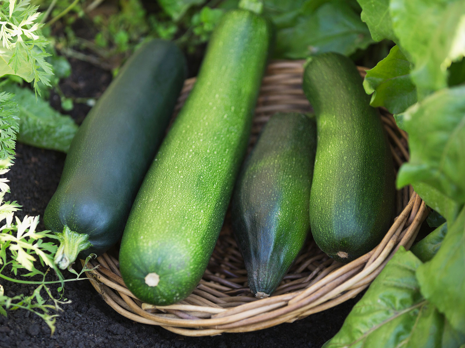 zucchini in baskets for national zucchini on porch day