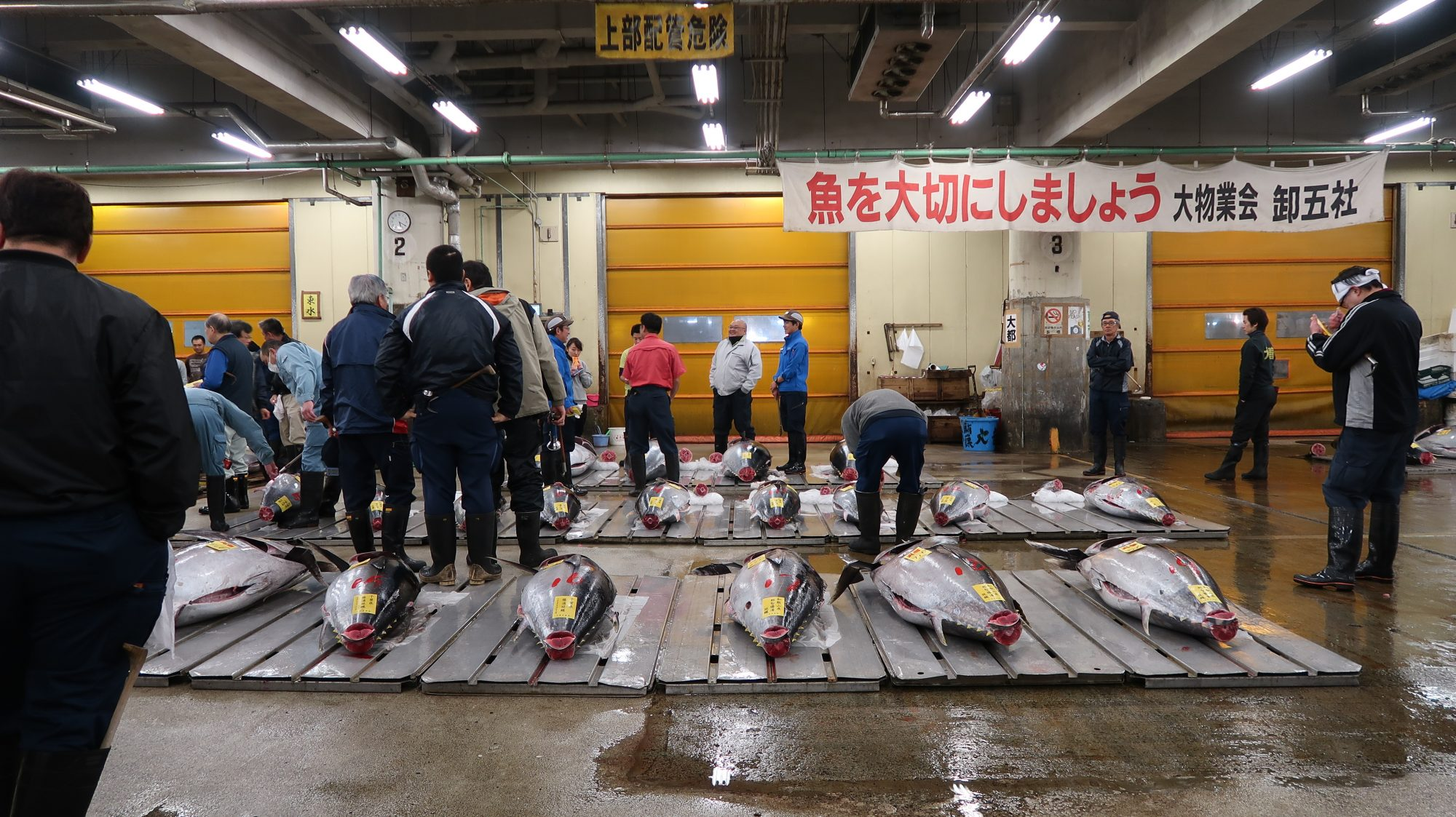 tsukiji-fish-market-tuna-auction-blog1117.JPG