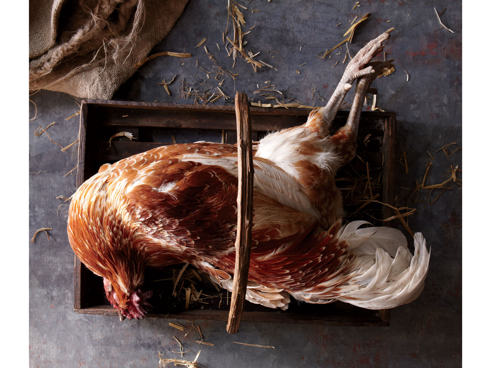 Small Farm Chicken at Buvette, 2014