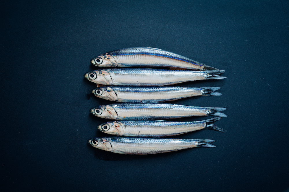 anchovies-blog618.jpg