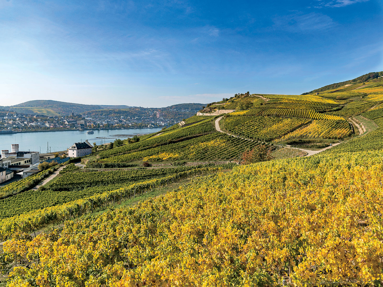 cruise-culinary-guide-explore-wine-country-FT-MAG0119.jpg